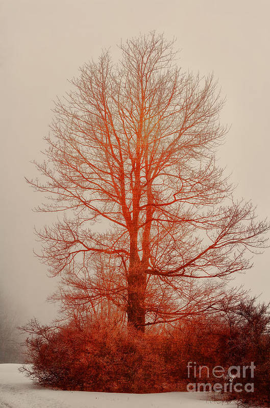 Tree Poster featuring the photograph On Fire In The Fog by Lois Bryan