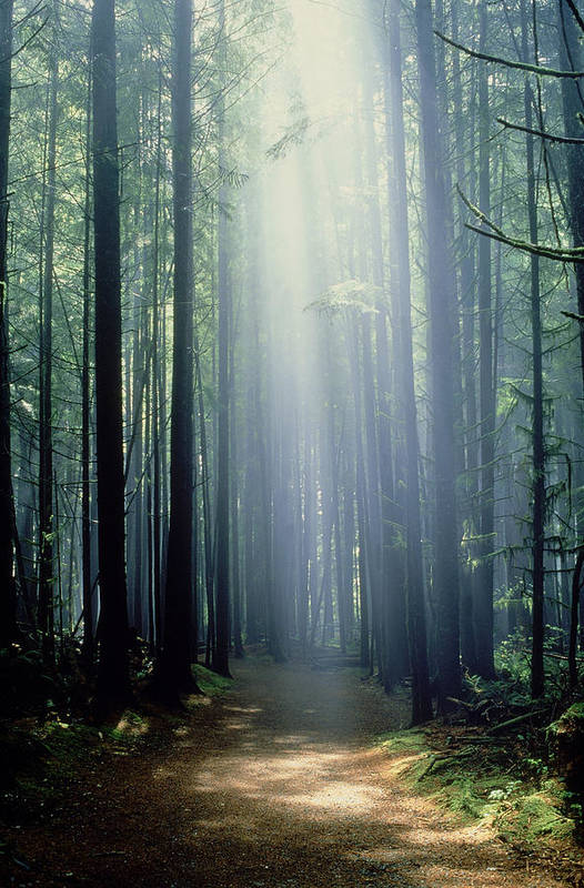 Calming Poster featuring the photograph T. Bonderud Path Through Trees In Mist by First Light