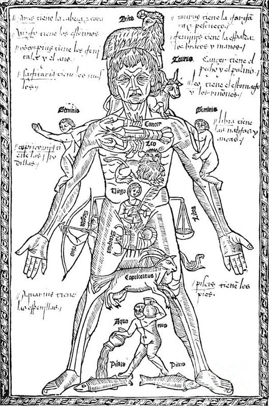Science Poster featuring the Zodiac Man, Medical Astrology by Science Source