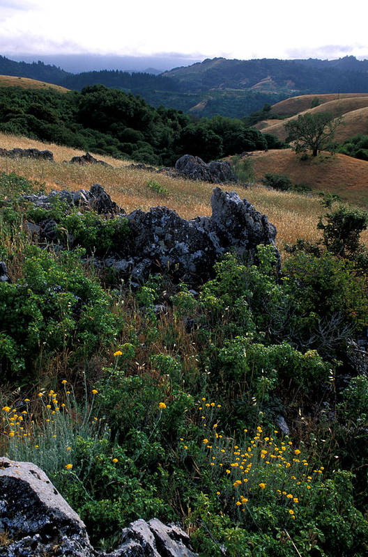 Landscape Poster featuring the photograph Golden Hills Of Summer by Kathy Yates