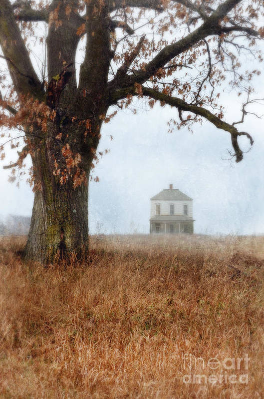 Tree Poster featuring the photograph Rural Farmhouse And Large Tree by Jill Battaglia