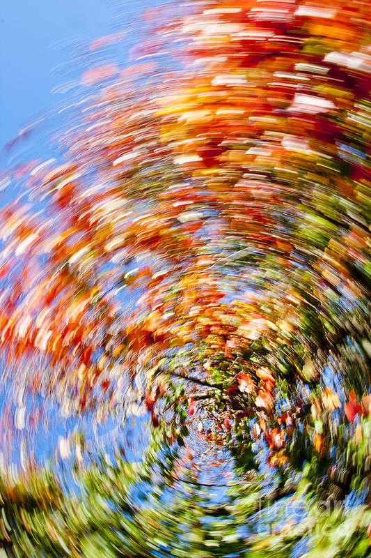 Autumn Poster featuring the photograph Fall Abstract by Steven Ralser