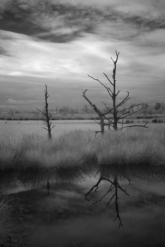 Infrared Poster featuring the photograph Infrared Picture Of Nature Areas In The Netherlands Dwingelderveld by Ronald Jansen