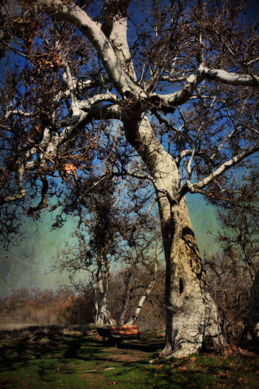 Sycamore Grove Park Poster featuring the photograph A Day Like This by Laurie Search