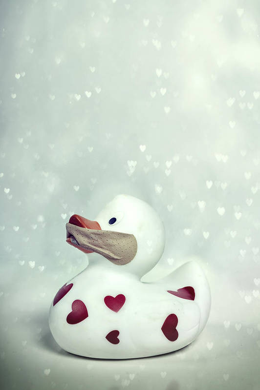 Duck Poster featuring the photograph A Shut Mouth Catches No Flies by Joana Kruse