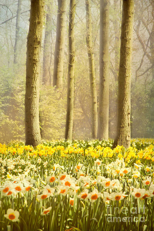 Forest Poster featuring the photograph A Spring Day by Jasna Buncic
