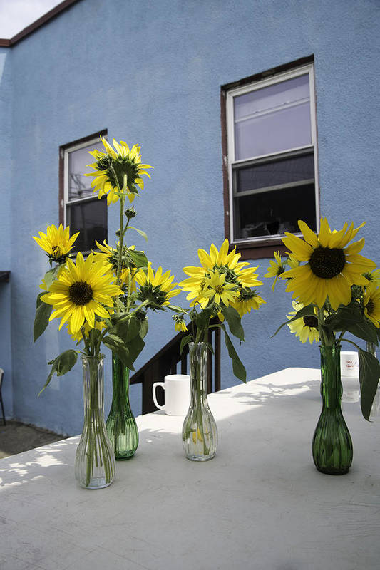 Sunflower Poster featuring the photograph A Sunny Day by Michael Glenn