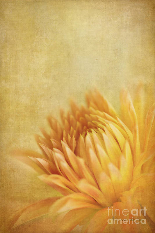Dahlia Poster featuring the photograph Autumn Delight by Beve Brown-Clark Photography