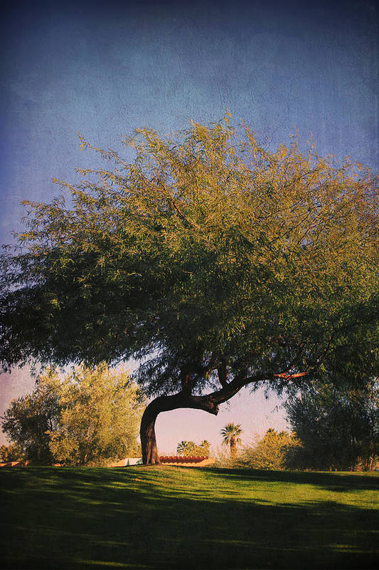 La Quinta Civic Center Park Poster featuring the photograph Bent But Not Broken by Laurie Search