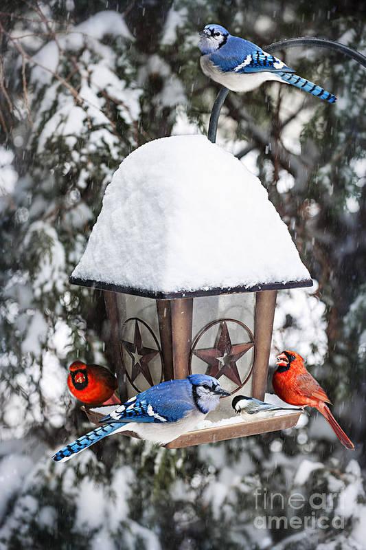 Birds Poster featuring the photograph Birds On Bird Feeder In Winter by Elena Elisseeva