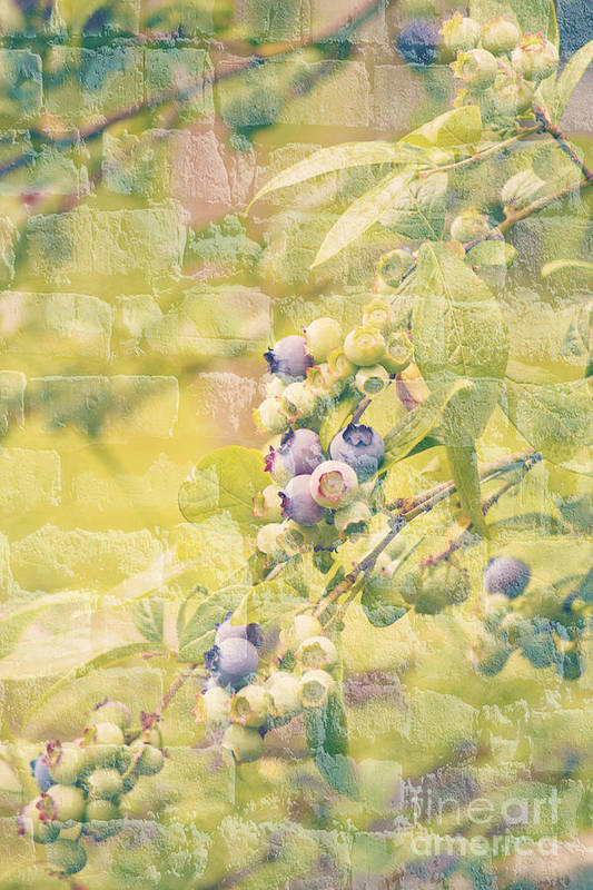 Blueberries Poster featuring the photograph Blueberries Painted On The Wall by Alanna DPhoto