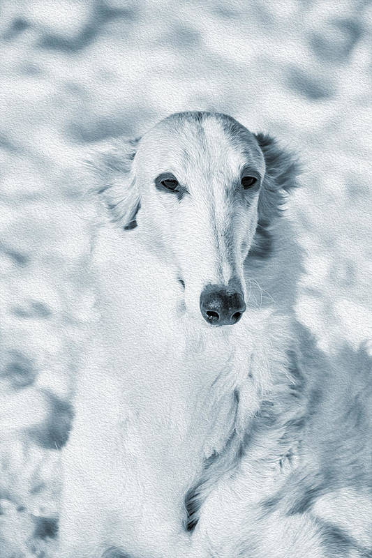 Borzoi Poster featuring the photograph Borzoi Russian Hound Portrait by Christian Lagereek