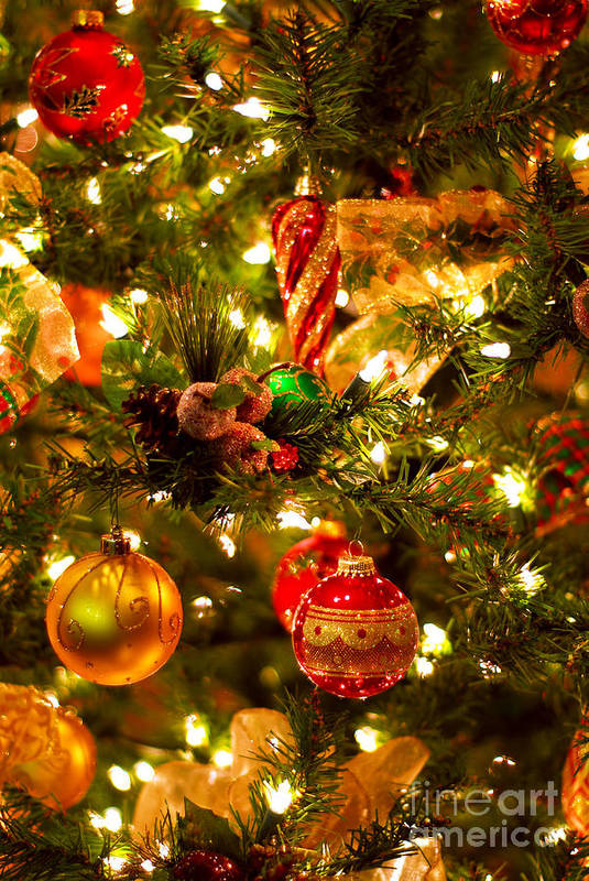 Christmas Poster featuring the photograph Christmas Tree Background by Elena Elisseeva