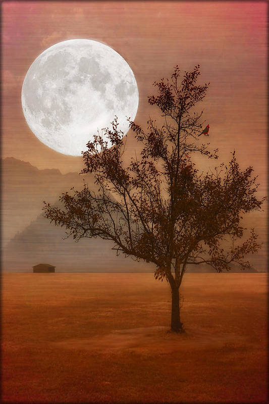 Landscape Poster featuring the photograph Copper Tree by Tom York Images