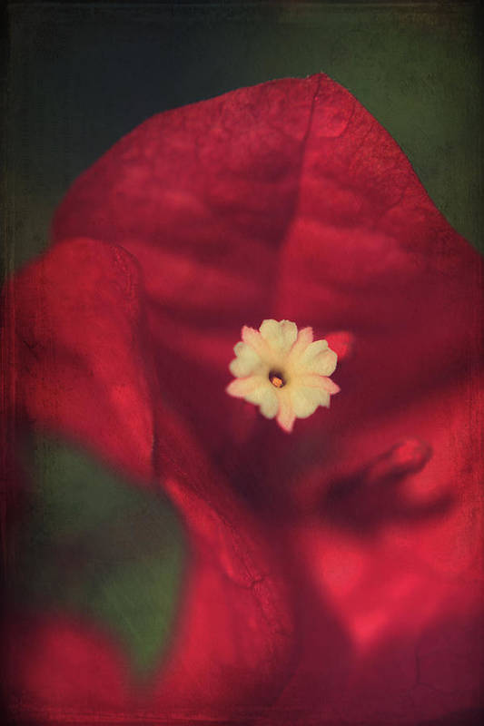 Flowers Poster featuring the photograph Cradle Me In Your Arms by Laurie Search
