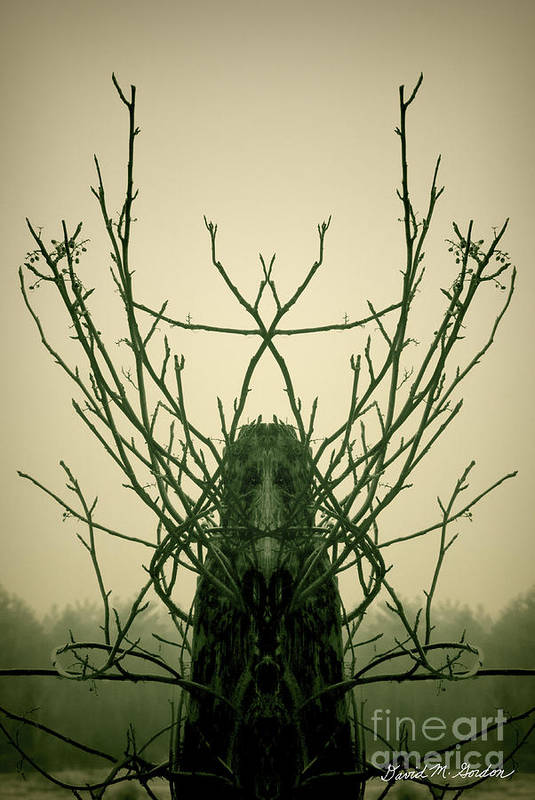 Archetype Poster featuring the photograph Creature Of The Wood by David Gordon