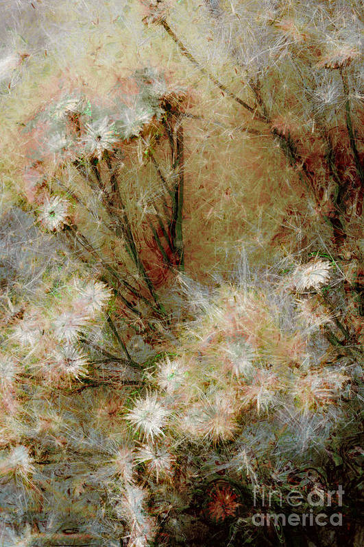 Daisy Poster featuring the photograph Daisy A Day 22 by Julie Lueders