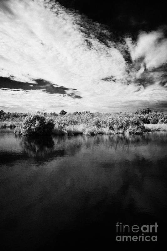 Florida Poster featuring the photograph Flooded Grasslands And Mangrove Forest In The Florida Everglades by Joe Fox
