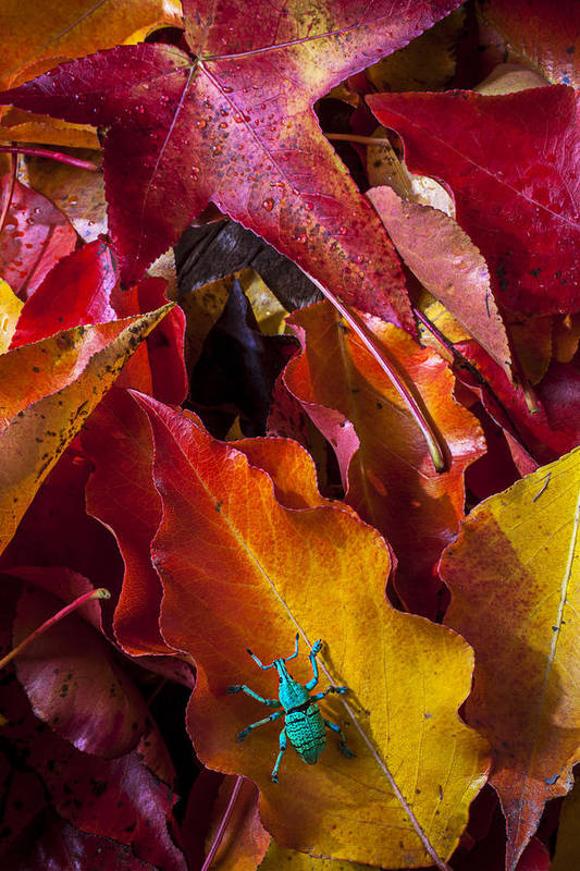 Autumn Poster featuring the photograph Green Bug by Garry Gay