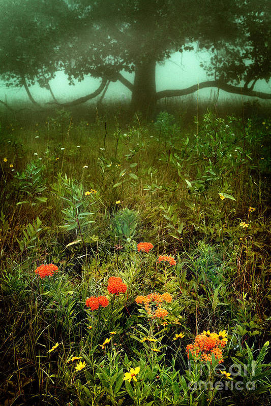 North Carolina Poster featuring the photograph Heaven In The Gloom I - Blue Ridge Parkway by Dan Carmichael