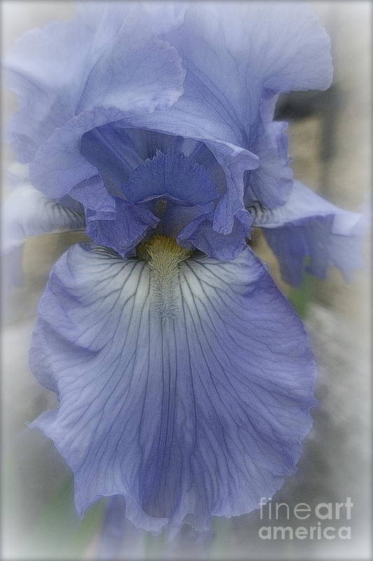 Blue Poster featuring the photograph Iris Heart by Kay Novy