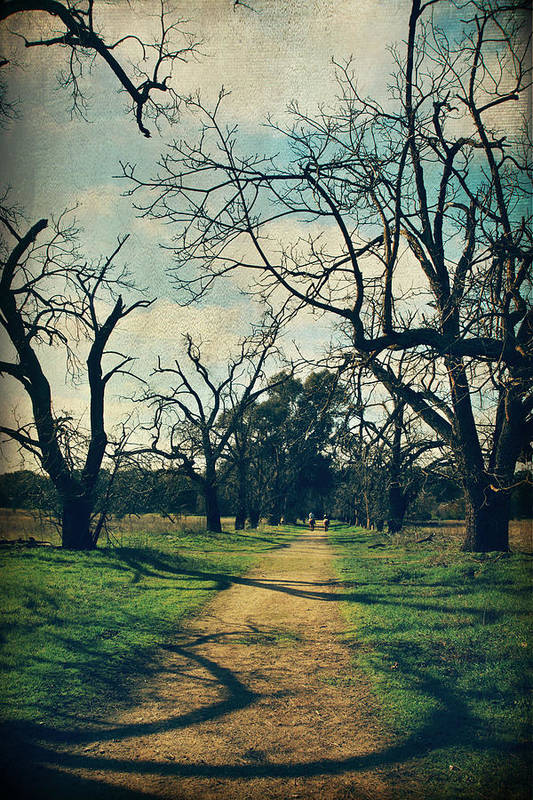 Sycamore Grove Park Poster featuring the photograph It All Depends by Laurie Search
