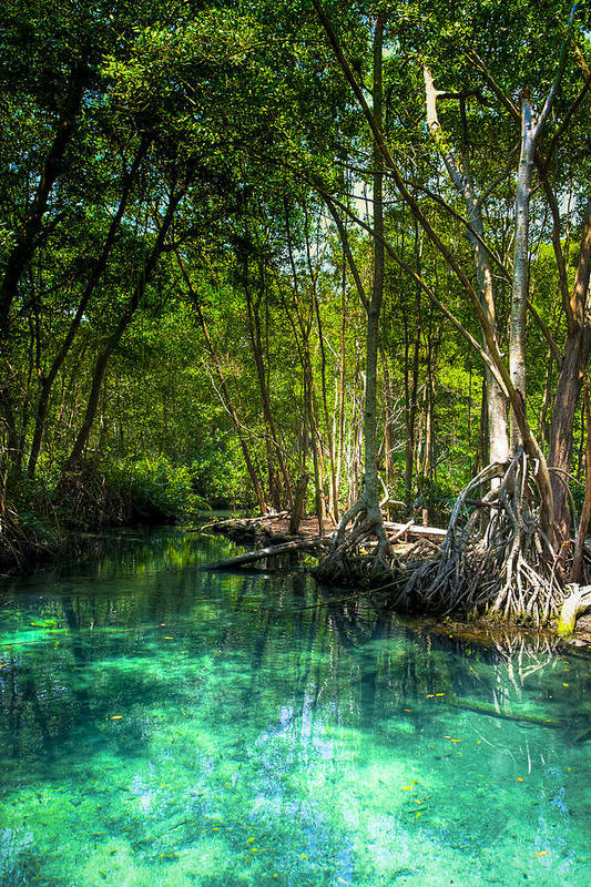 Blue Poster featuring the photograph Lost Lagoon On The Yucatan Coast by Mark E Tisdale