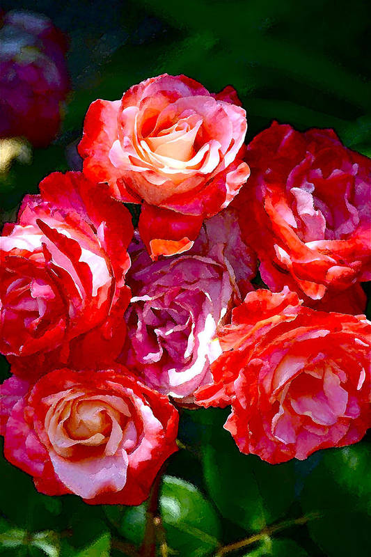 Floral Poster featuring the photograph Rose 124 by Pamela Cooper