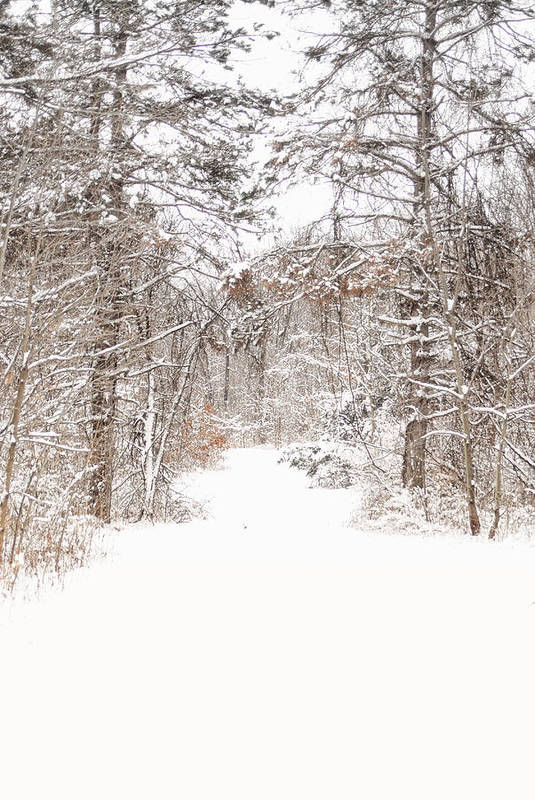 Path. Snow. Trees. Forest. Snow Covered Trees. Snowy Landscape. Winter Landscape. Nature. Wiildlife. Photograph. Canvas. Poster. Greeting Card. Christmas Card. Poster featuring the photograph Snowy Path by Mary Timman