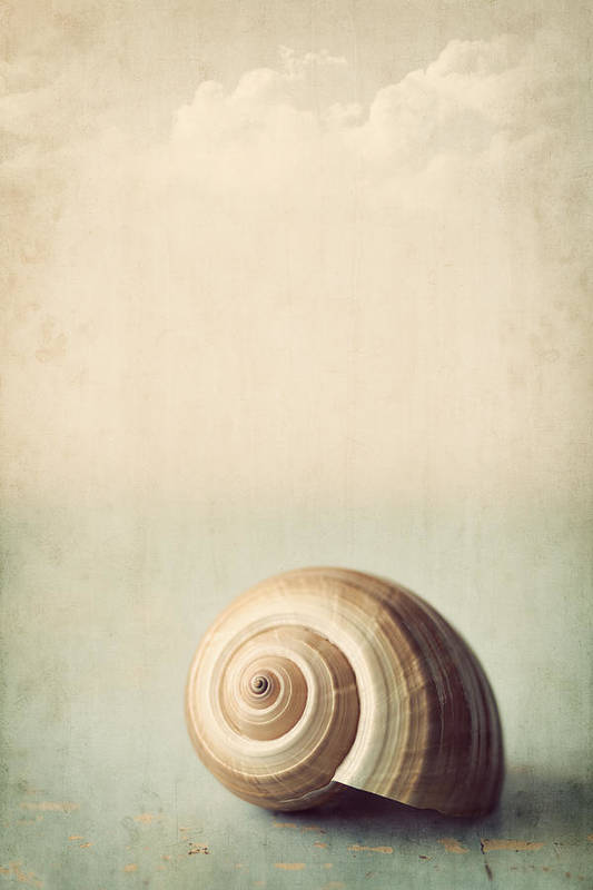 Shell Poster featuring the photograph Sojourn by Amy Weiss