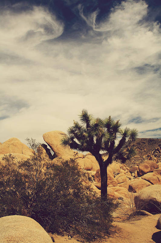 Joshua Tree National Park Poster featuring the photograph Solitary Man by Laurie Search