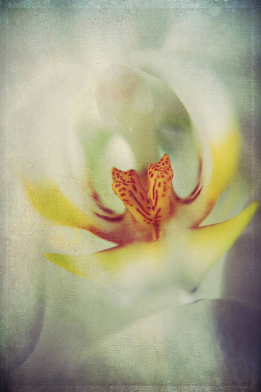 Orchids Poster featuring the photograph True by Laurie Search