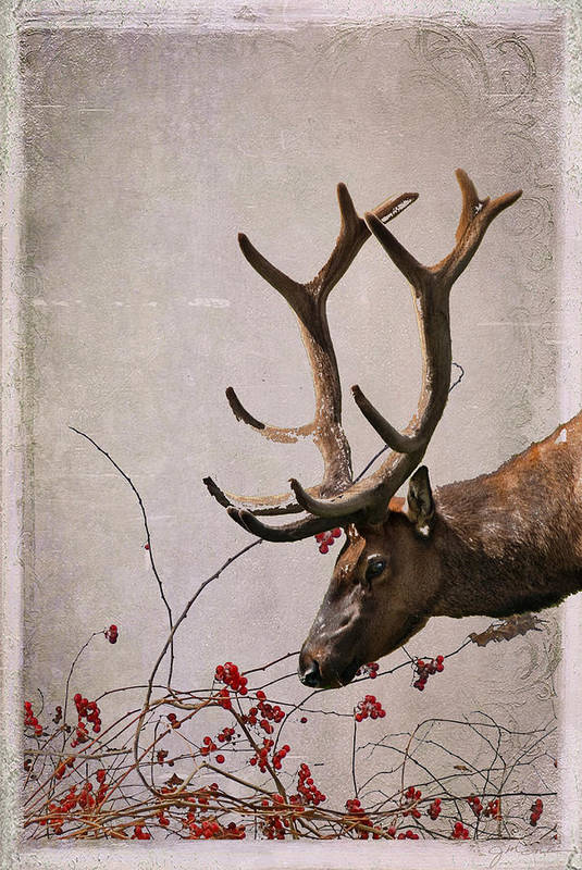 Elk Poster featuring the photograph Winter King by Julie Magers Soulen
