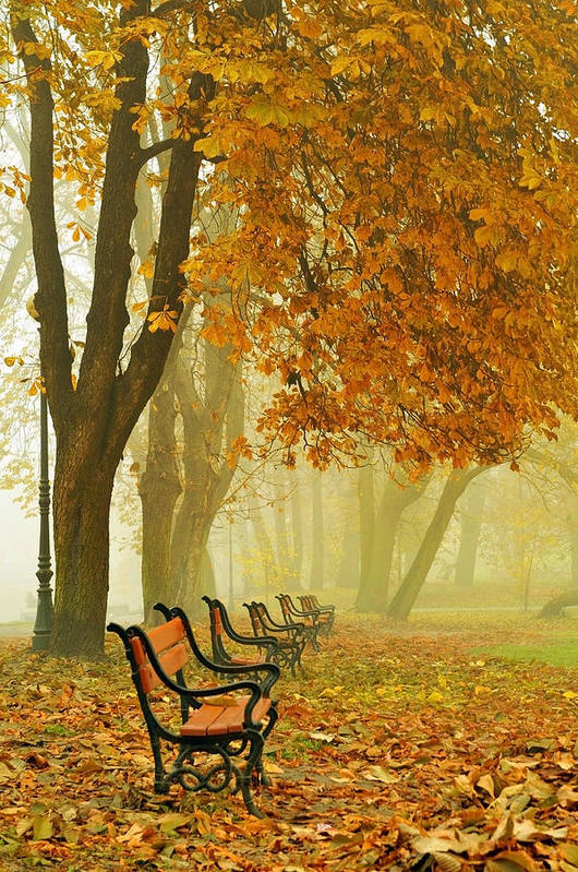 Alley Poster featuring the photograph Red Benches In The Park by Jaroslaw Grudzinski
