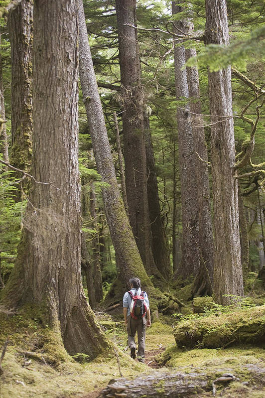 Queen Charlotte Islands Poster featuring the photograph A Woman Walks In Old Growth Forest by Taylor S. Kennedy