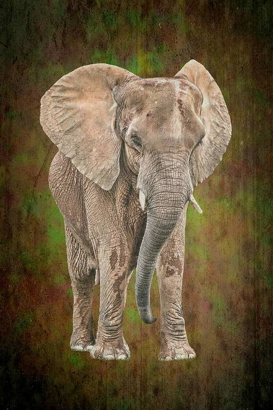 Isolated Poster featuring the photograph African Elephant by Rudy Umans
