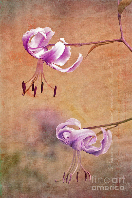 Lily Poster featuring the photograph Duet 05c by Aimelle