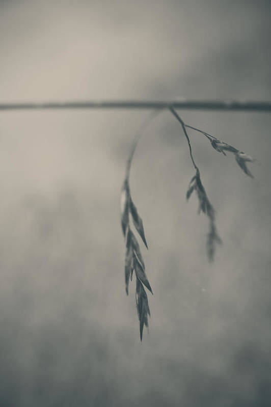 Grass Poster featuring the photograph If You Lost Your Love For Me by Laurie Search