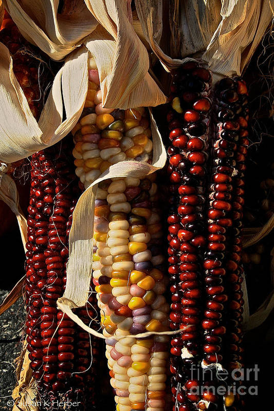 Autumn Poster featuring the photograph Indian Corn by Susan Herber