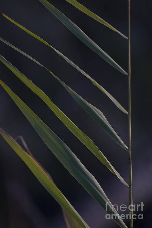 Nature Poster featuring the photograph Just Grass by Heiko Koehrer-Wagner