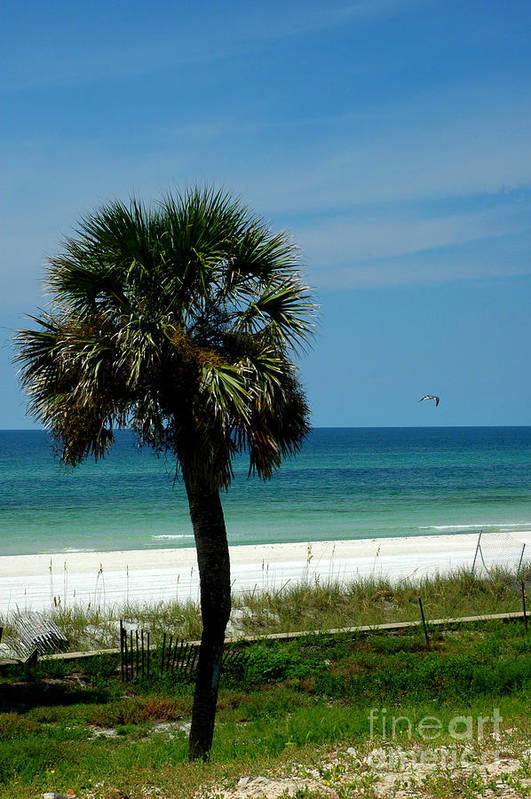 Palm Tree Poster featuring the photograph Palmetto And The Beach by Susanne Van Hulst