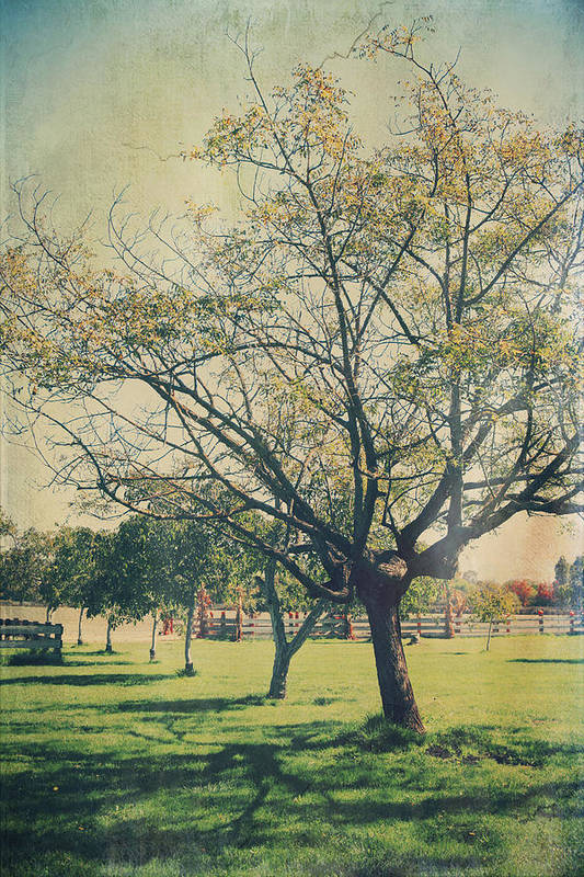 Trees Poster featuring the photograph Redemption by Laurie Search