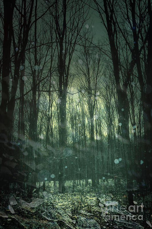 Atmospheric Poster featuring the photograph Winter Forest At Twilight by Sandra Cunningham