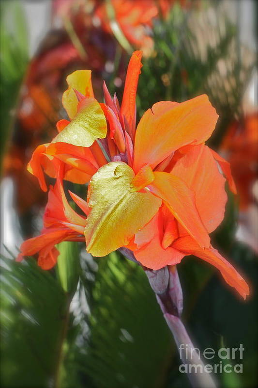 Floral Poster featuring the photograph Orange Bright by Maureen J Haldeman