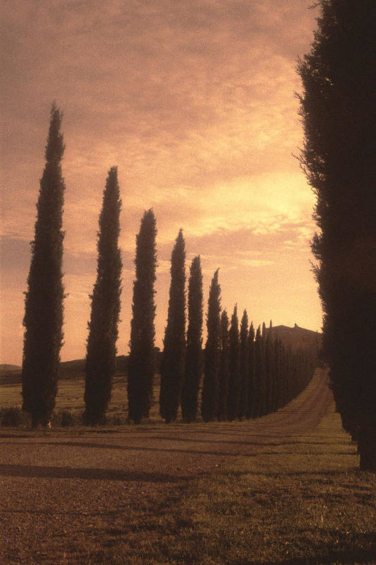 Italy Poster featuring the photograph Cypress Driveway by Andrew Soundarajan