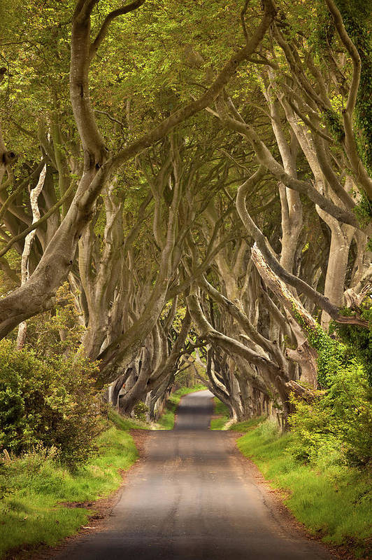 Beach Poster featuring the photograph Dark Hedges by Pawel Klarecki