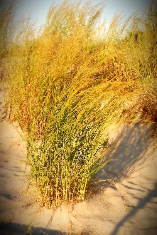 Sand Dune Poster featuring the photograph Dune Grass II - Jersey Shore by Angie Tirado