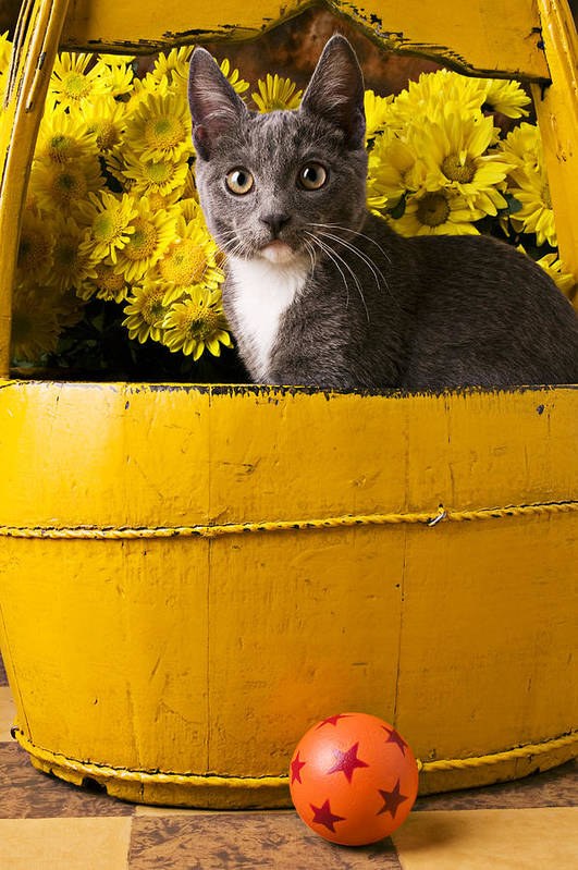Kitten Poster featuring the photograph Gray Kitten In Yellow Bucket by Garry Gay