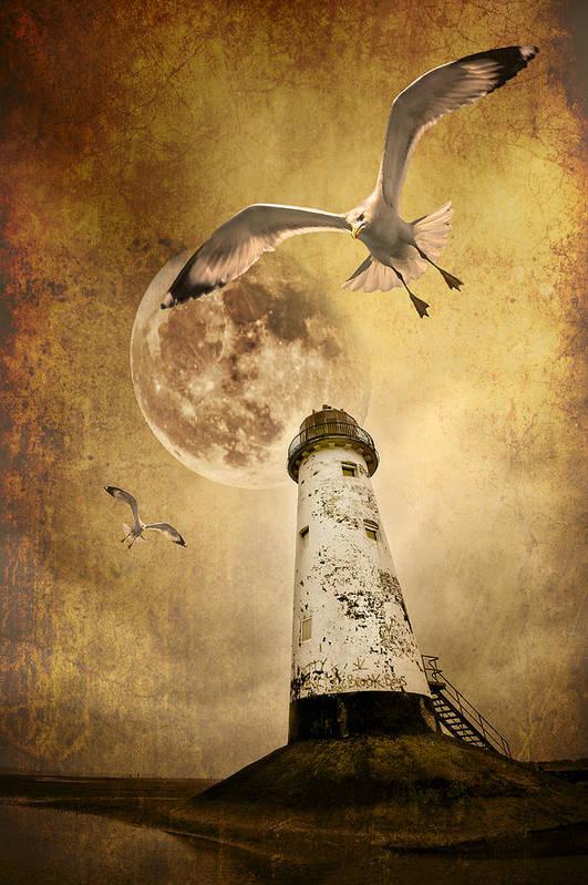 Seagull Poster featuring the photograph Lunar Flight by Meirion Matthias