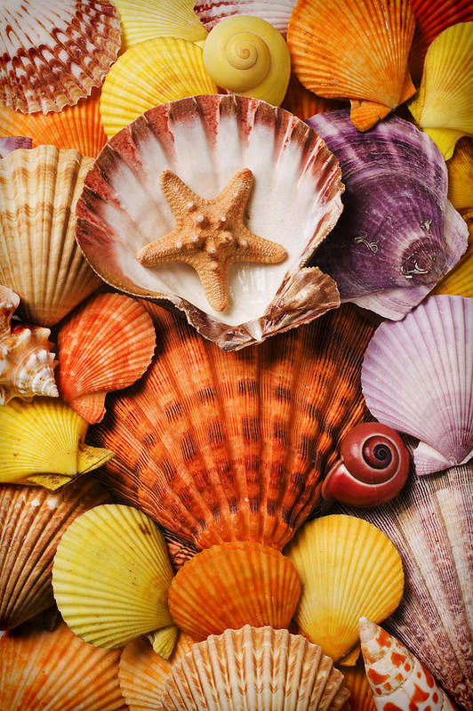 Seashells Poster featuring the photograph Pile Of Seashells by Garry Gay